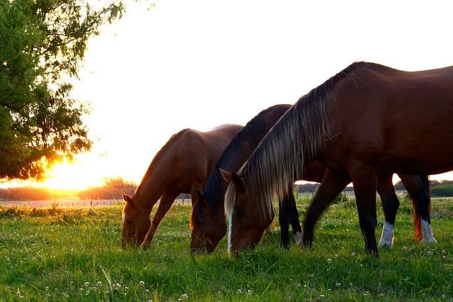 horses-2536540_640.jpg