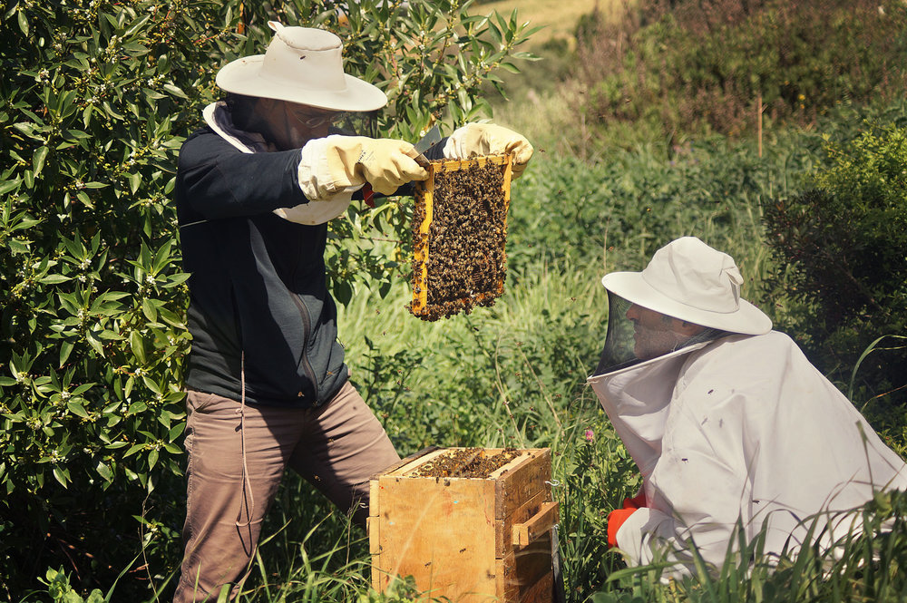 We are part of a local network of natural beekeepers called  Apijanda .