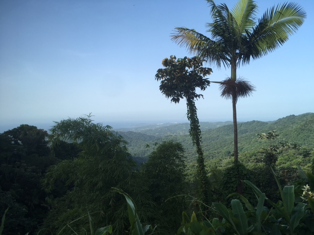 View from haflway up the mountain at El Yunque National Forest in Puerto Rico.