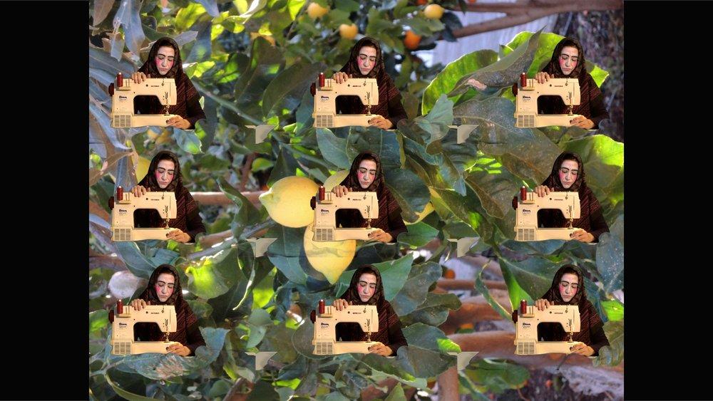 still from 9 Halas in the lemon tree.jpg