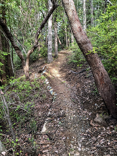A4B worked closely with MCOS to retain as much of the original character of this trail as possible. We also played an instrumental role in creating the first in-sloped, bermed switchbacks on OS property!