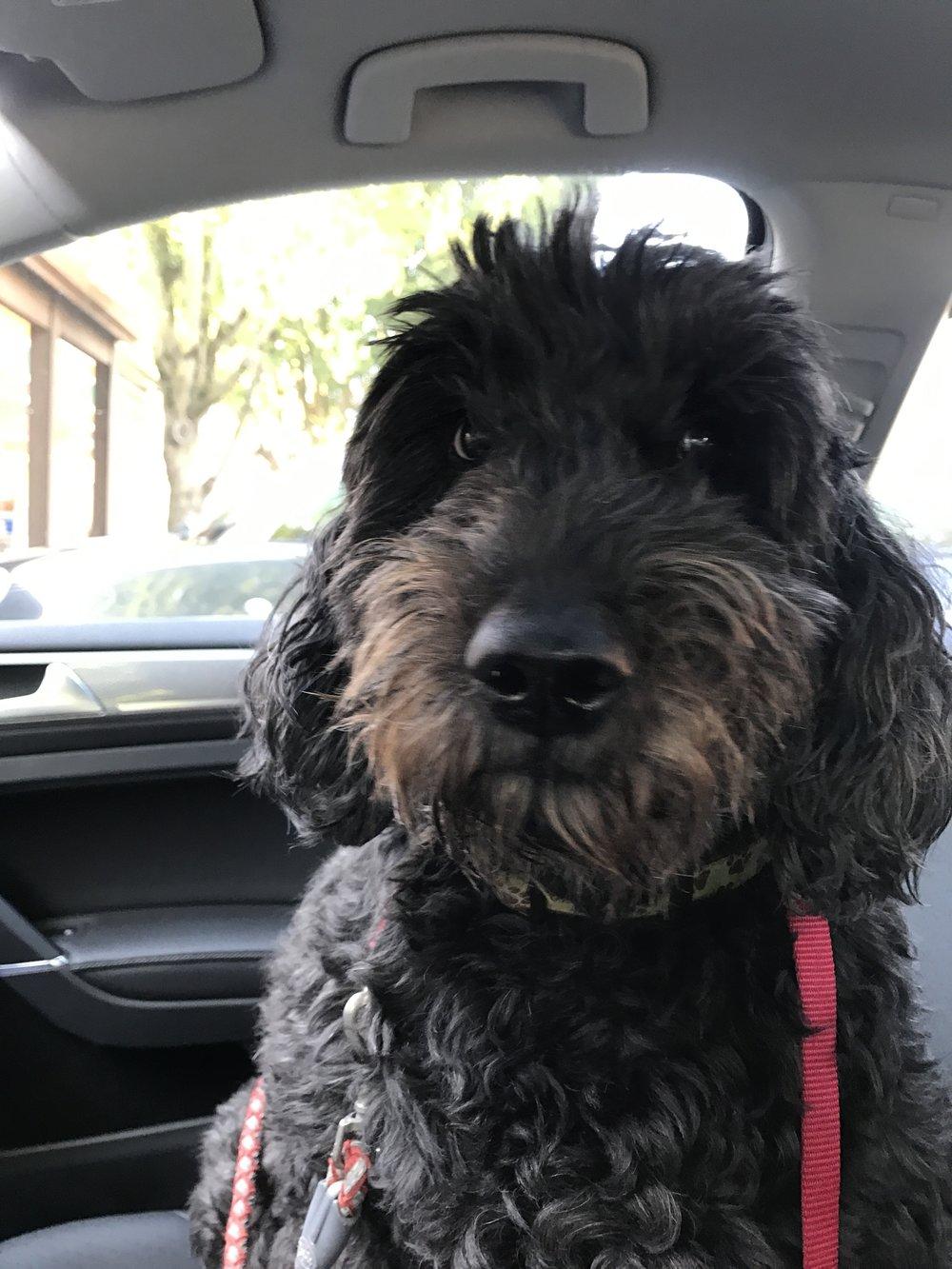 My dog Gumbo!