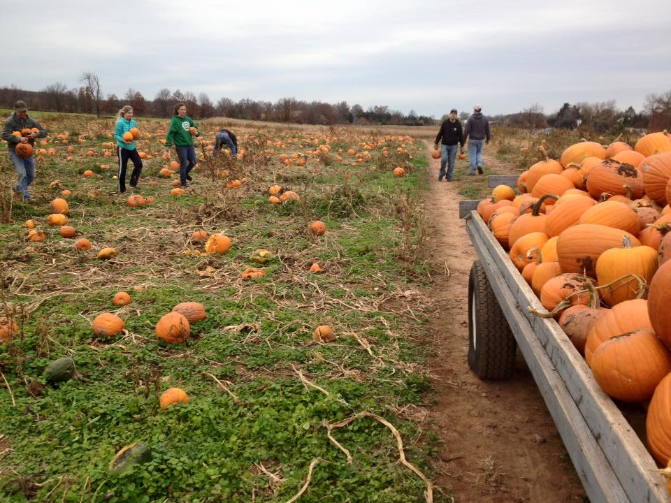 pumpkin-landscape.jpg