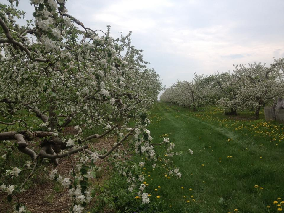 spring-orchard.jpg