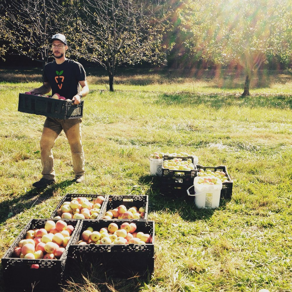 Gleaning Apples at Adams County Nursery