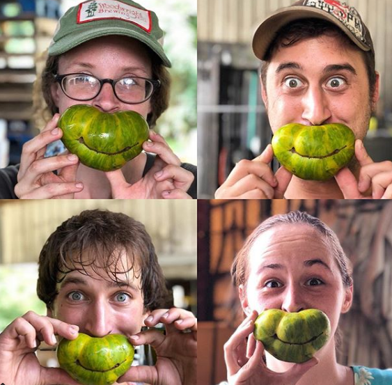 Three Springs staff having a little fun in the middle of tomato season, photo courtesy of their Instagram, @3springsfruit.