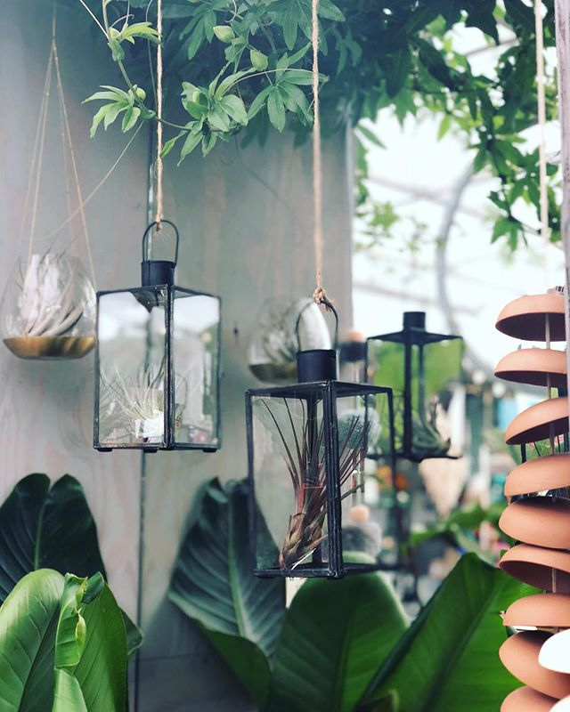 Cozy Wednesday over here💁🏼♀️🌟 • • • • • • #growvenice #interiordesign #designla#modernlife#cool#venturesome #abbotkinney #happyjanuary #gooutsideandbe #2018#venicebeach#apartmenttherapy#bohodecor#bohohome#designsponge#fpme#jungalow#jungalowstyle#plantsmakepeoplehappy#urbanjungle#botanicalpickmeup#plantlove#plantlover #joshuatree #desert #hotel #cool #picoftheday #likeback #followforfollow