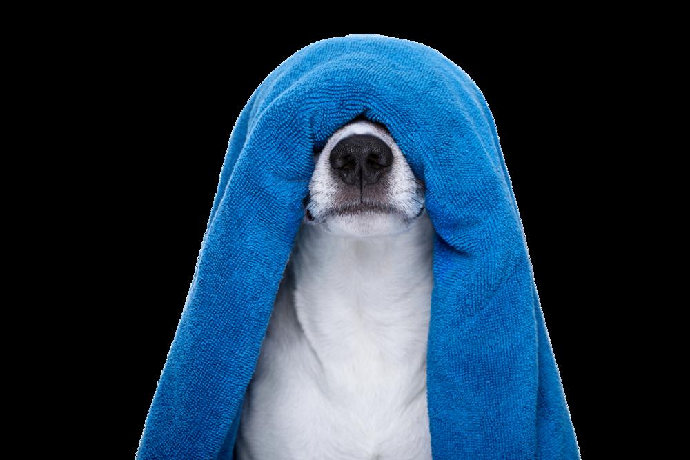 Dog_Bath_Specials