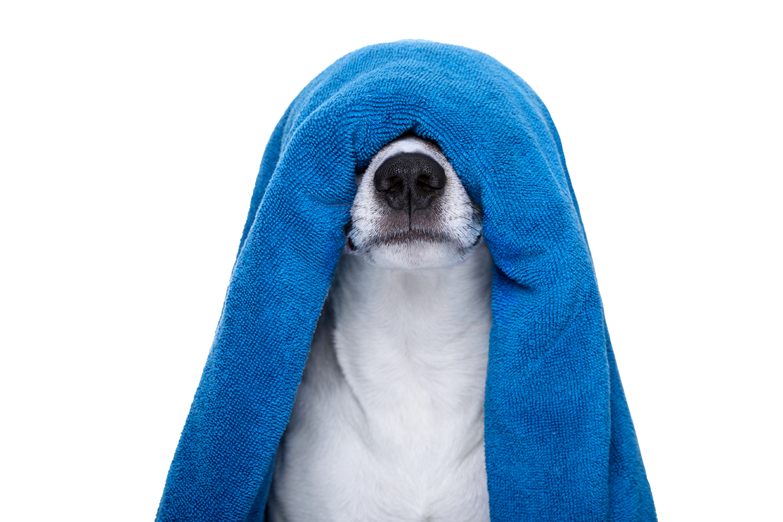 The barking lot pet grooming la mesa ca dogbathspecials solutioingenieria Image collections