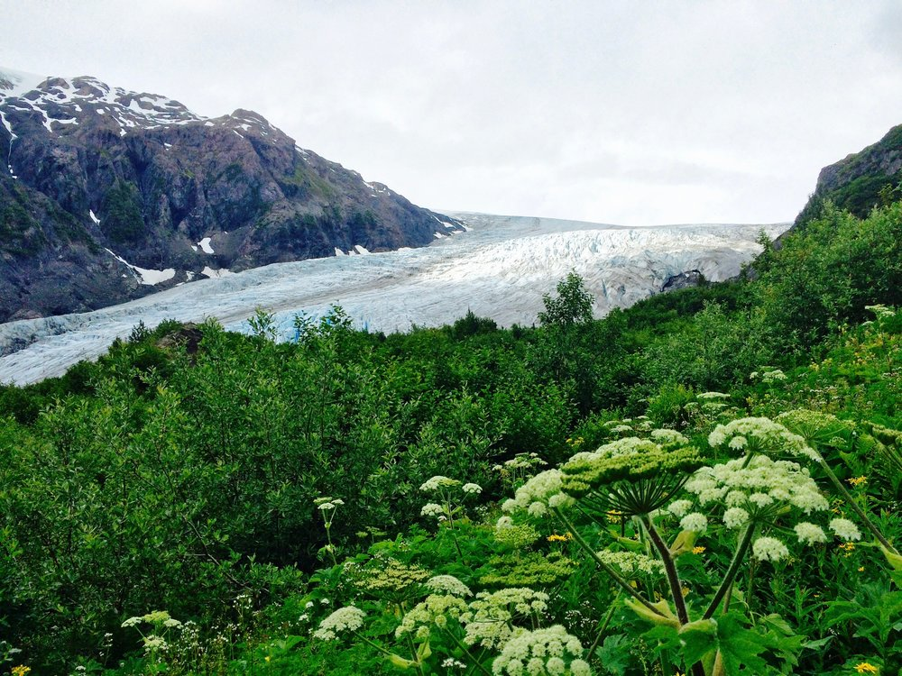 We hiked more than a mile past a marker indicating the toe (or end) of the glacier in 1917. I took this photo of what remains of Exit glacier in Kenai Fjords National Park in Alaska in 2014. Check out  this article  to learn more.