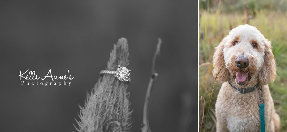 Engagement Session, Fall, Capen Park, Columbia MO, field, woods, warm, sun kissed, sunset, Trees, Diamond ring, center stone, diamond band, detail, goldendoodle