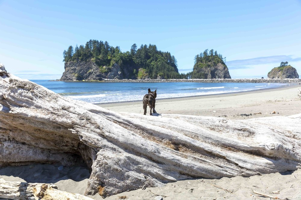 quileute_shore_zzy_driftwood_banner.jpg