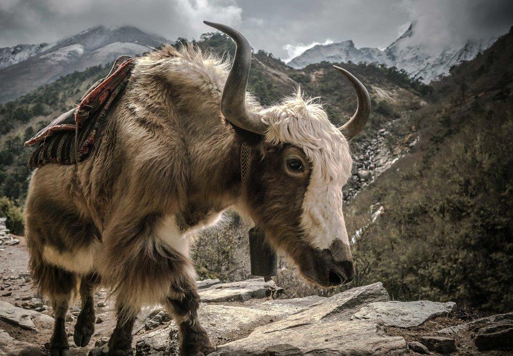 Himalayas-WEB-13.jpg