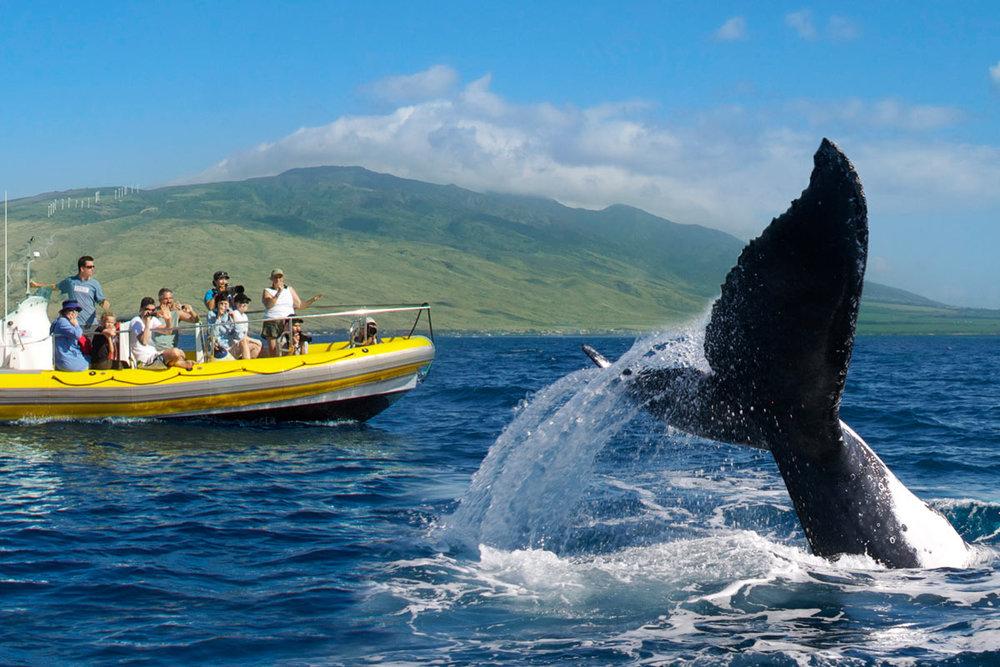 2 whale.jpg