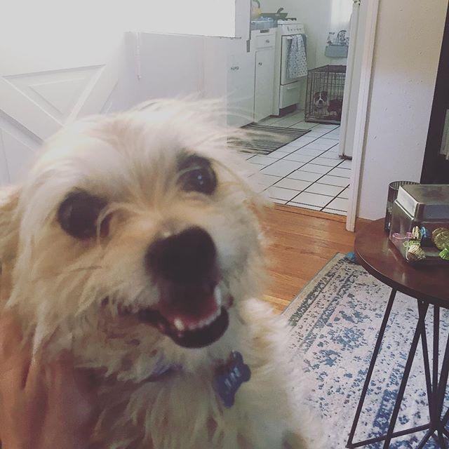One happy dog. One @vanessabob  #puppyprison #billpaxton #junesbigday🎓