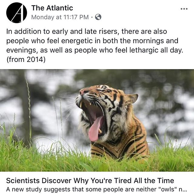 In other news, science discovers shades-of-gray. . #tigerseatsleep #dreameaters #sleep #science #noshit #duh