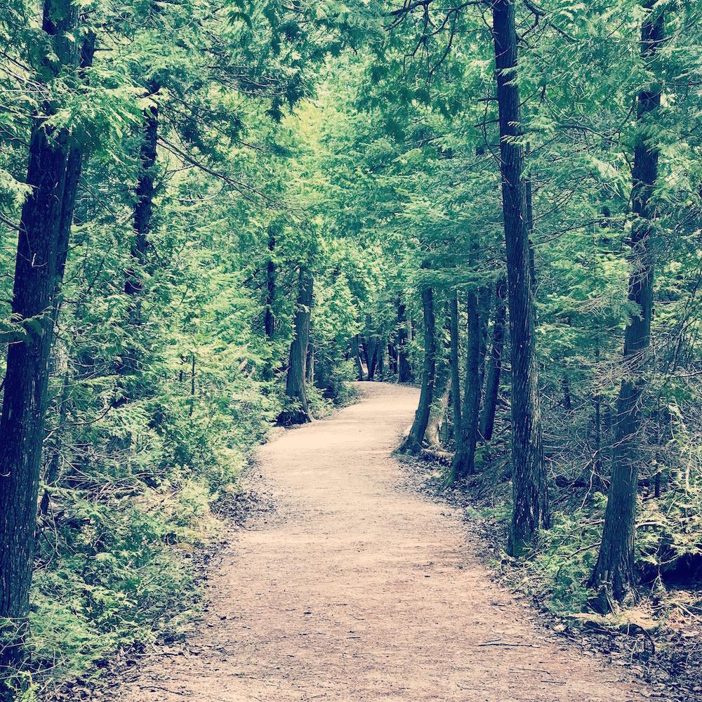 tasha-forest-trees.jpg