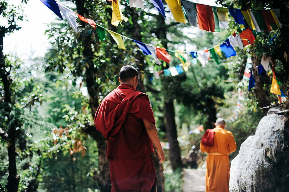 Buddhist monks walk down a forest path