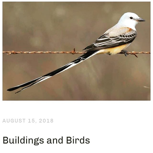 Did you know we have a professional birder in our office? Our very own Karen while highly passionate about sleek buildings is also very passionate about birds and all things outdoors! Check out Agora's latest blog post to find out about her two passions, and how we can design our buildings to be safer for birds.  https://www.agoraarchitecture.com/agorablog/buildingandthebirds #architecture #design #buildings #birds #nature #blog