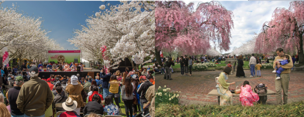 Philadelphia Cherry Blossom Festival
