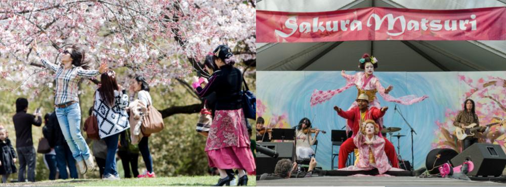 Brooklyn Cherry Blossom Festival