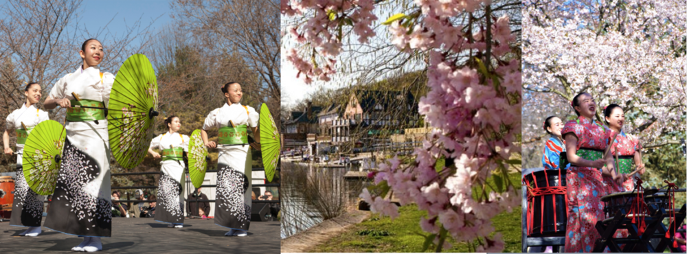 Cherry Blossom Festival in Philadelphia