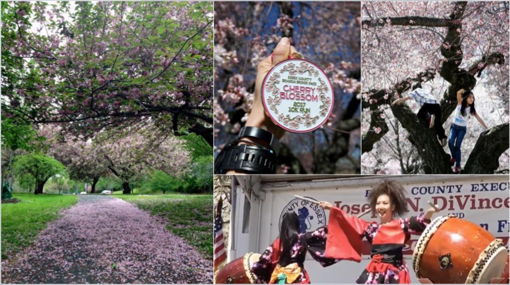 Newark Cherry Blossom Composite 2019 v2.png