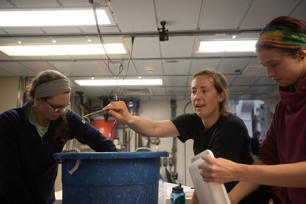 Fish team members Caitlin Forster and Ann Zinkann, assisted by Brittany Jones, sift through the first bottom trawl results with Caitlin showing off a shrimp. Photo credit: Brendan Smith