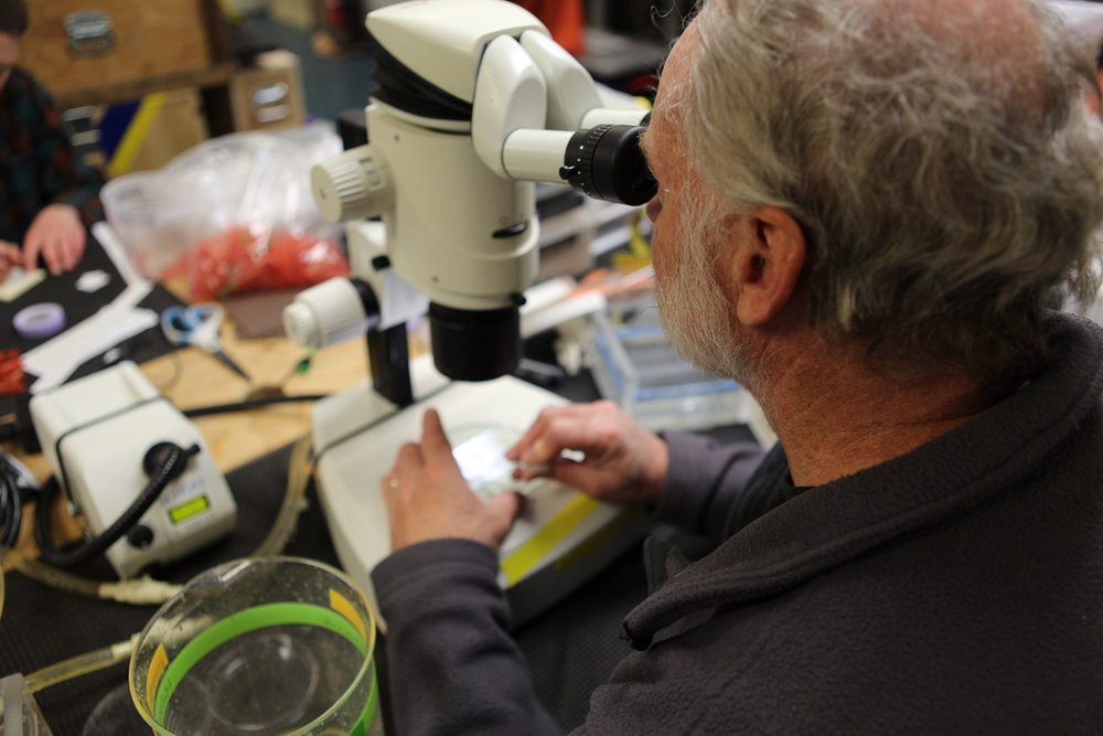 Russ Hopcroft examining some of the water collected from the CTD Rosette looking for different species of zooplankton. Photo credit: Brendan Smith