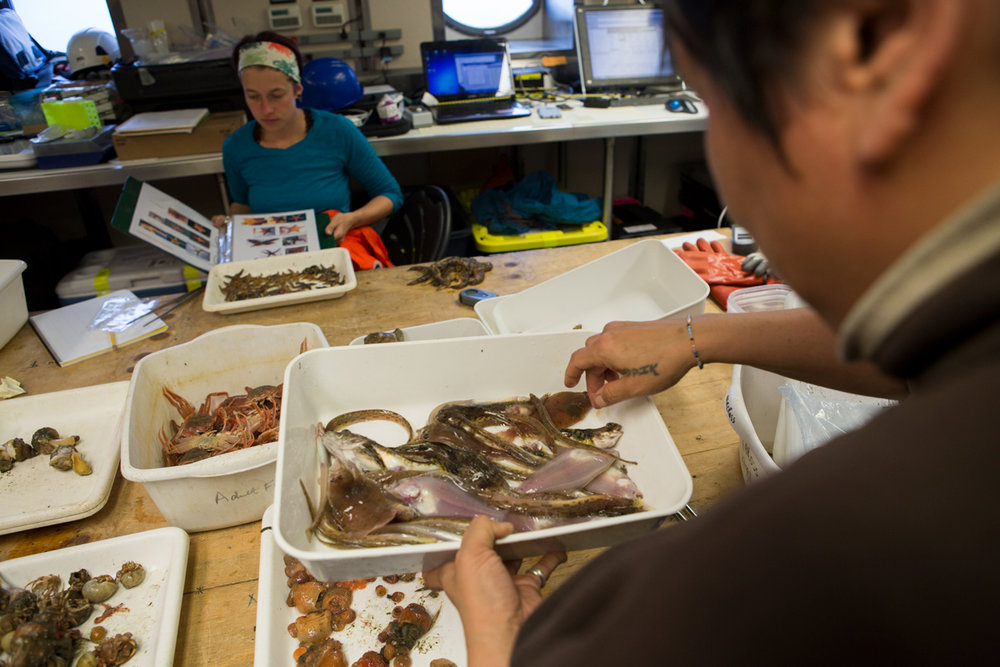 Close up of a bottom-water trawl. Opik Ahkinga was holding the tray to examine what types of species were collected. Photo credit: Brendan Smith