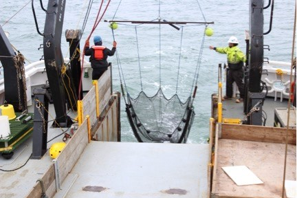 Beam trawl is hauled onto the R/V  Ocean Starr.  Left is Jose Valentine, right is Armando Urrutia. Photo credit: Libby Logerwell