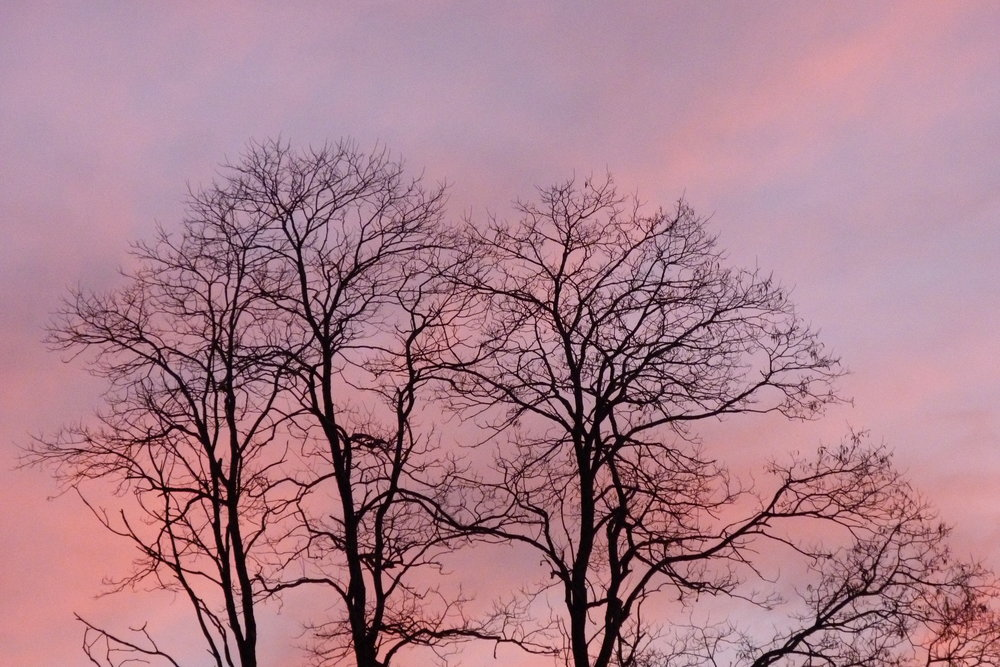 Trees and sky seen at Thetford, VT. (Photo: J. Horan)