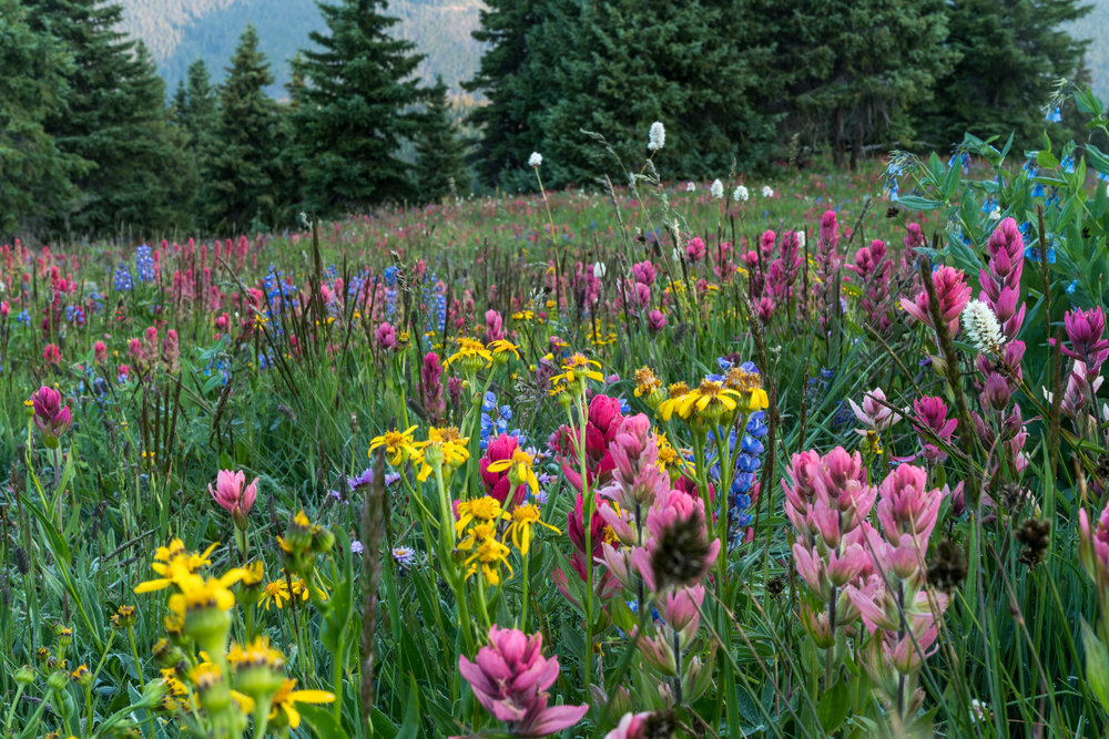 Colorful Colorado - 2017 — Matthew Landon Images