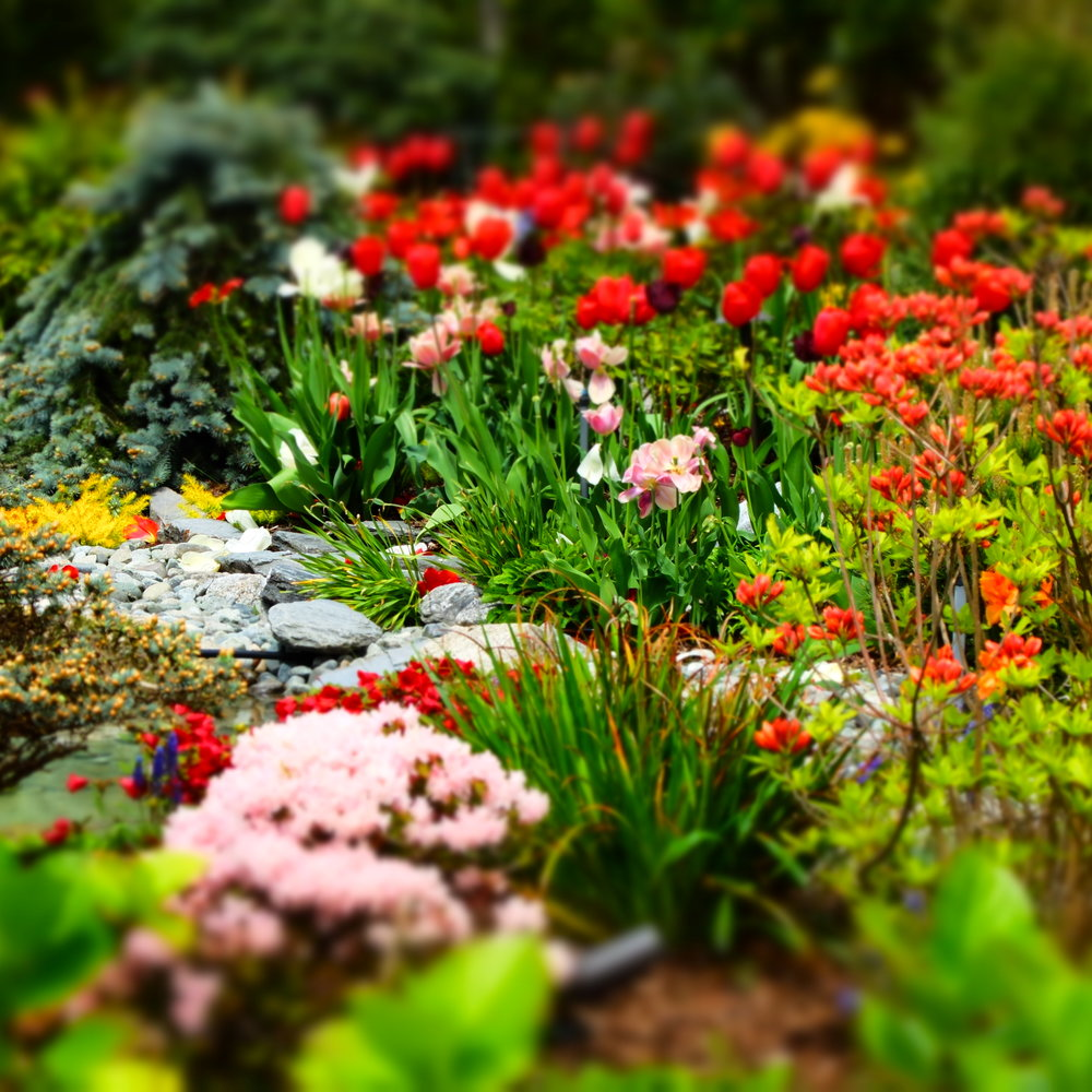 spring flowers 5.JPG
