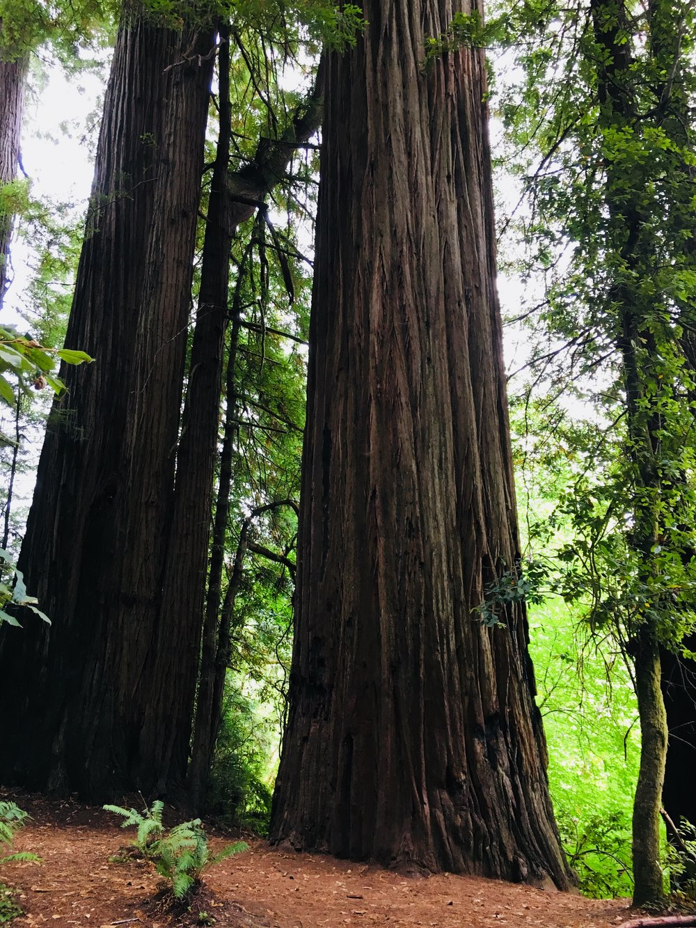 In other news check out these redwood trees! We have been on family vacation near Redwood National Park...it has been quite impressive to say the least!