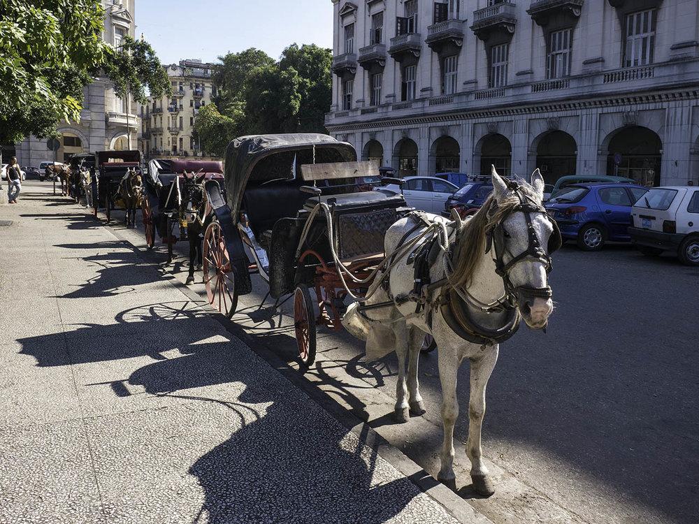 20121210_Havana_1726 Horses.jpg