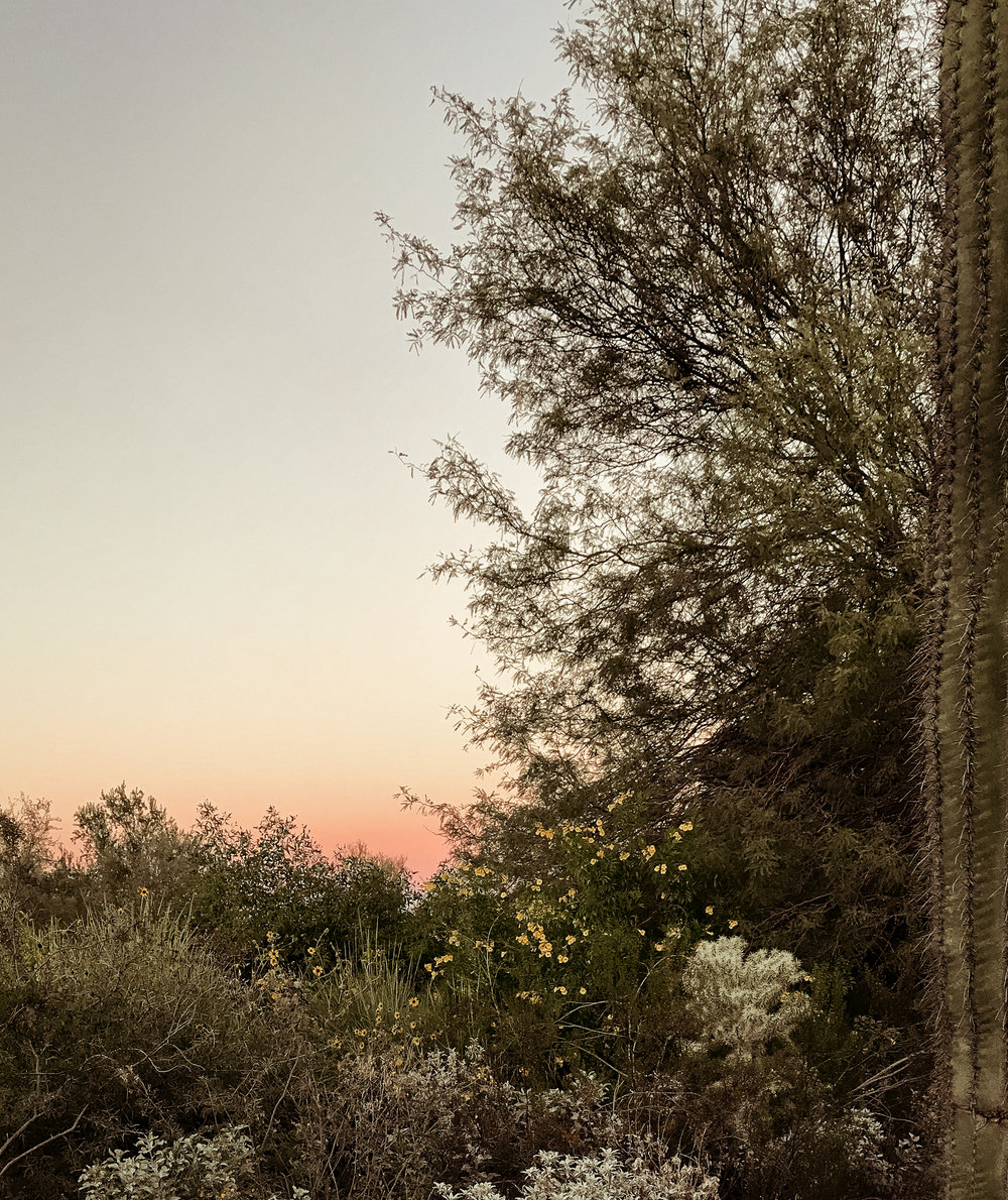 Phoenix, Arizona Desert Botanical Gardens at Sunset — THE VISUAL