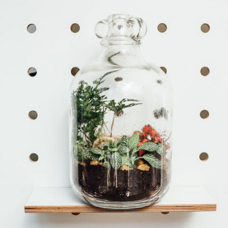 Closed Terrarium Workshop by Geo-fleur    Saturday 14th   October, 1-2pm     BUY TICKETS
