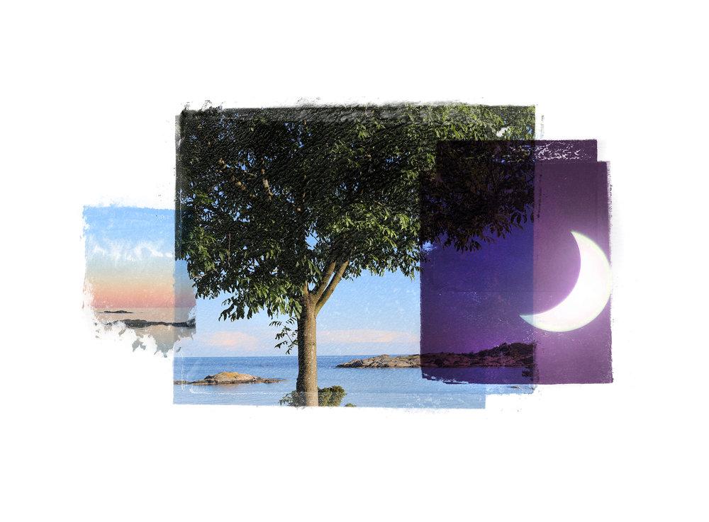 SummerTree / Solar Eclipse  Original Archival UV Pigment Print / BFK Rives 250 gr 35 x 25 cm / 13,7 x 10 in Edition of 50 + 7 Ap Editeur: Per Fronth Studios / Printer Henrik Aunevik  16/2015: