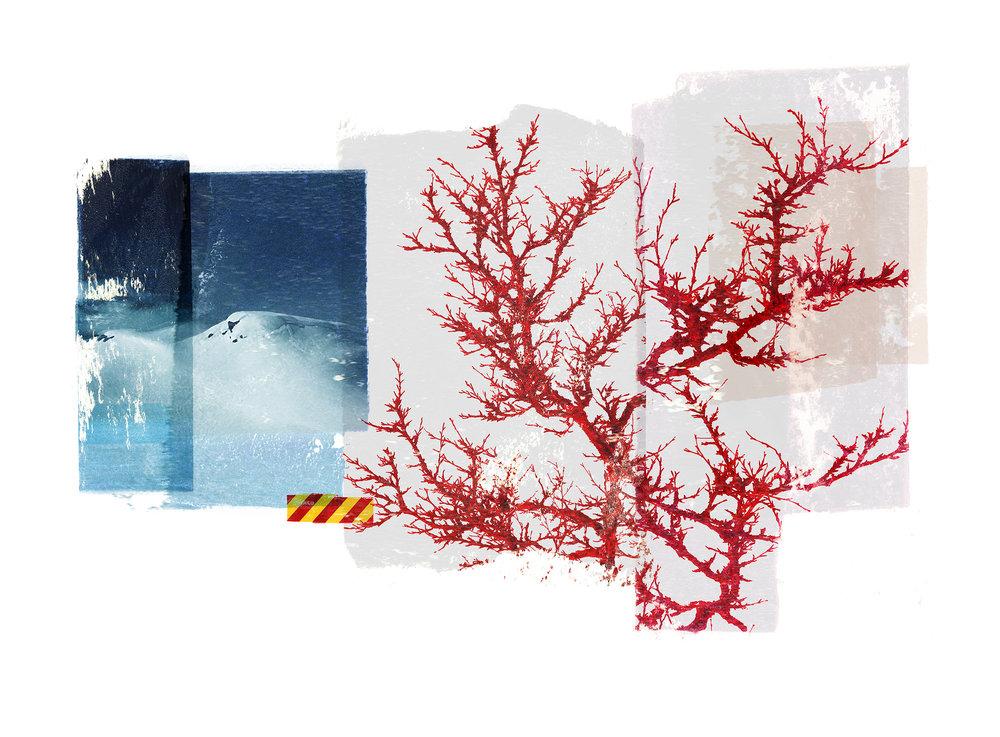 Reservoir / Red Birch (Setesdal)  Photo litho / BFK Rives 250 gr 76 x 56 cm / 22 x 30 Edition of 100 + 20 Ap Editeur: IDEM PARIS / Per Fronth Studios  19/2015: