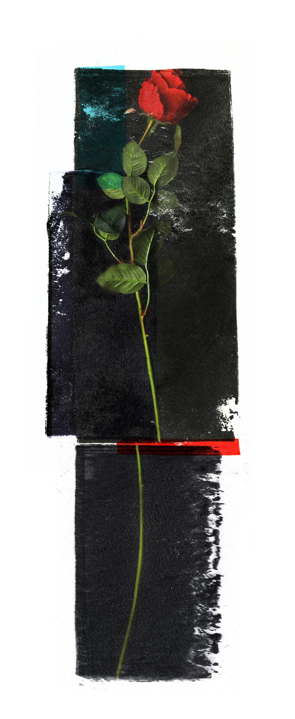 Cure ( Rose )   Original pigment print / BFK rives 250 gr 56 x 25 cm / 22 x 9,8 in Edition of 50 + 7 Ap Editeur: Per Fronth Studios / Henrik Aunevik  31/2014:
