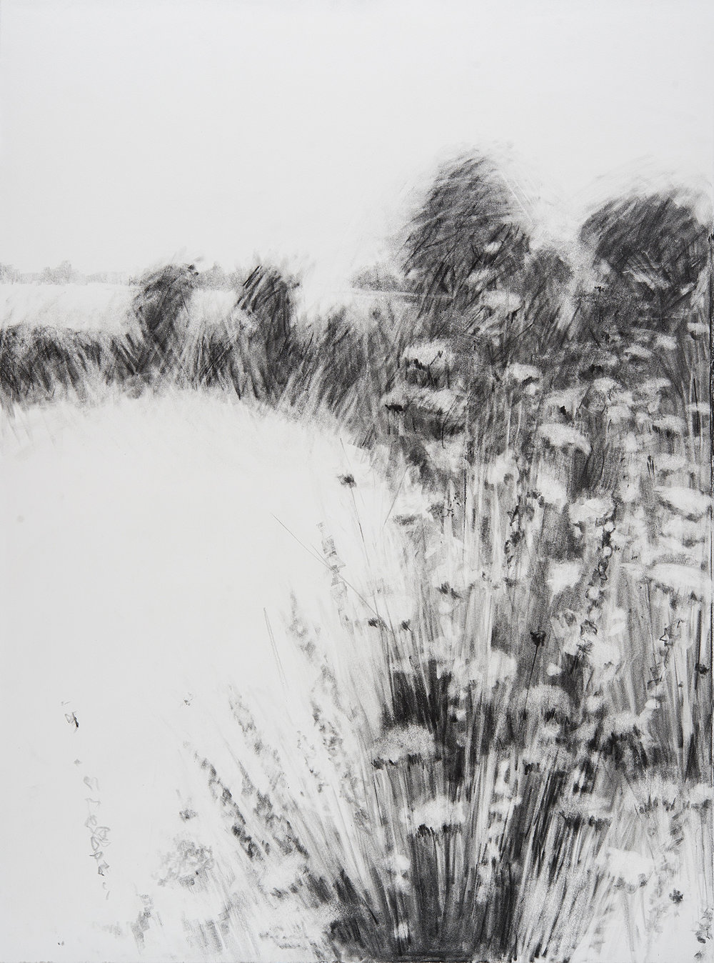 Flower Spikes, Kestle Barton.  Graphite on paper. 77 x 57cm  Sold