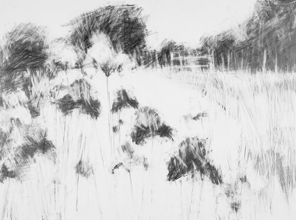 Irises, Kestle Barton Garden.  Graphite on Paper. 57 x 77cm  Sold