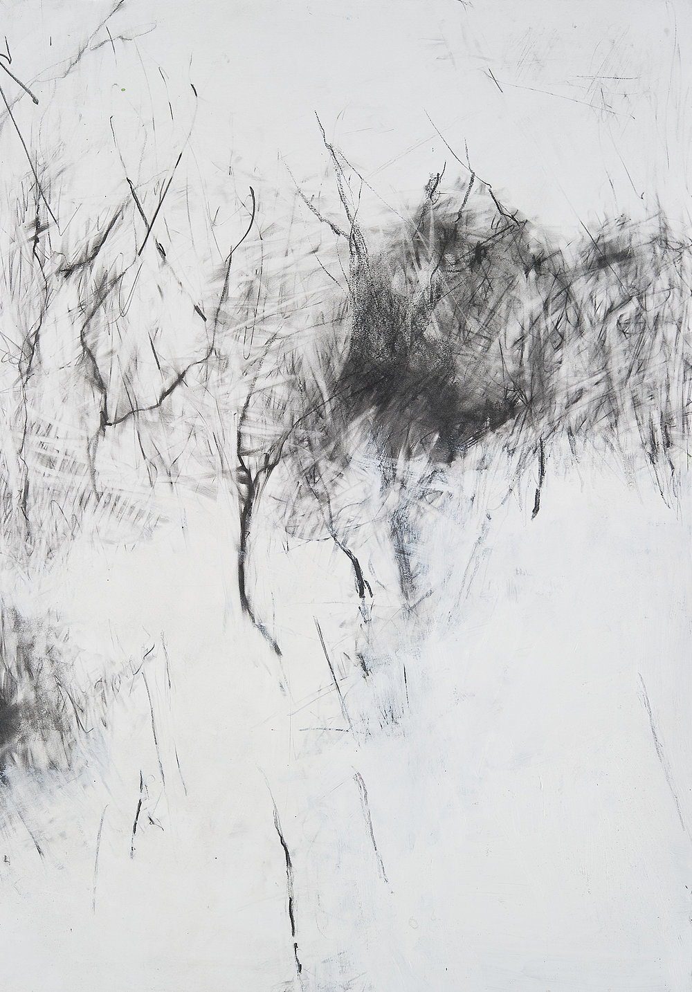 Winter Trees, Snow in the Garden.  Graphite and gesso on paper. 71 x 50cm.  NFS