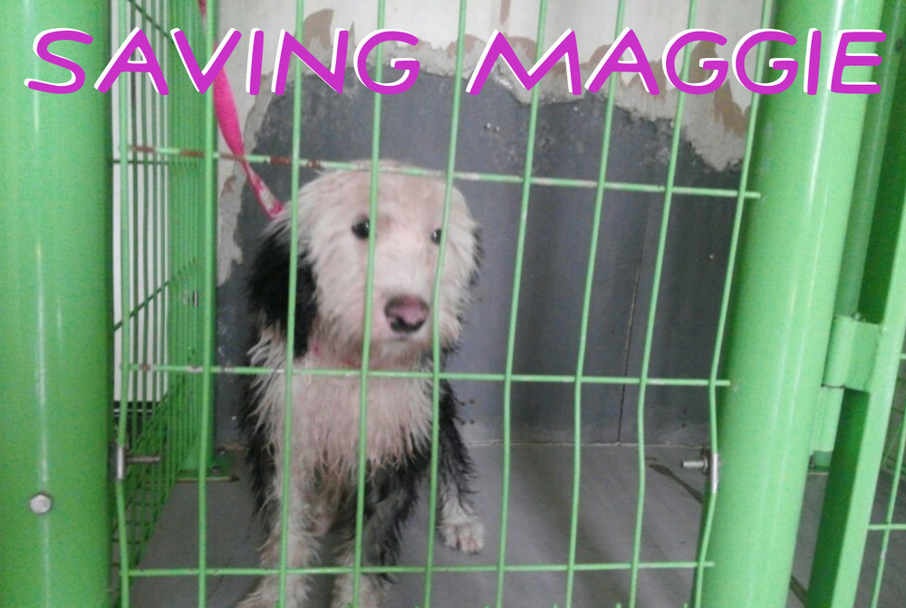 maggie4.jpg