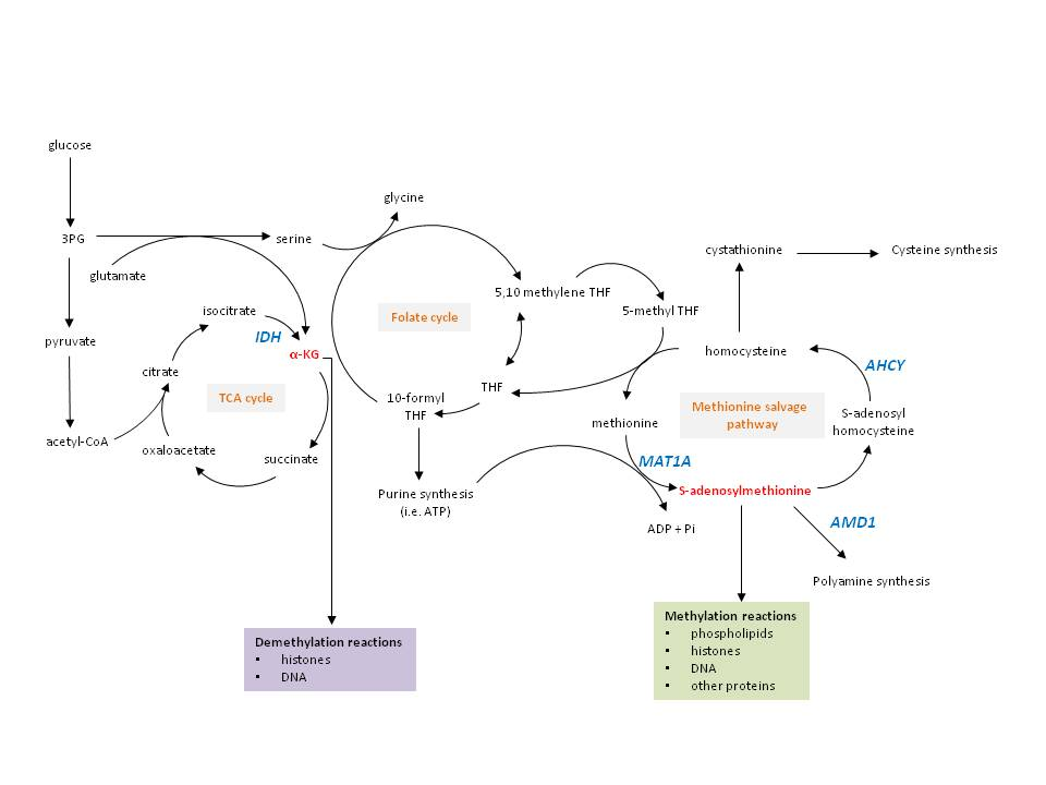metabolic pathways.jpg