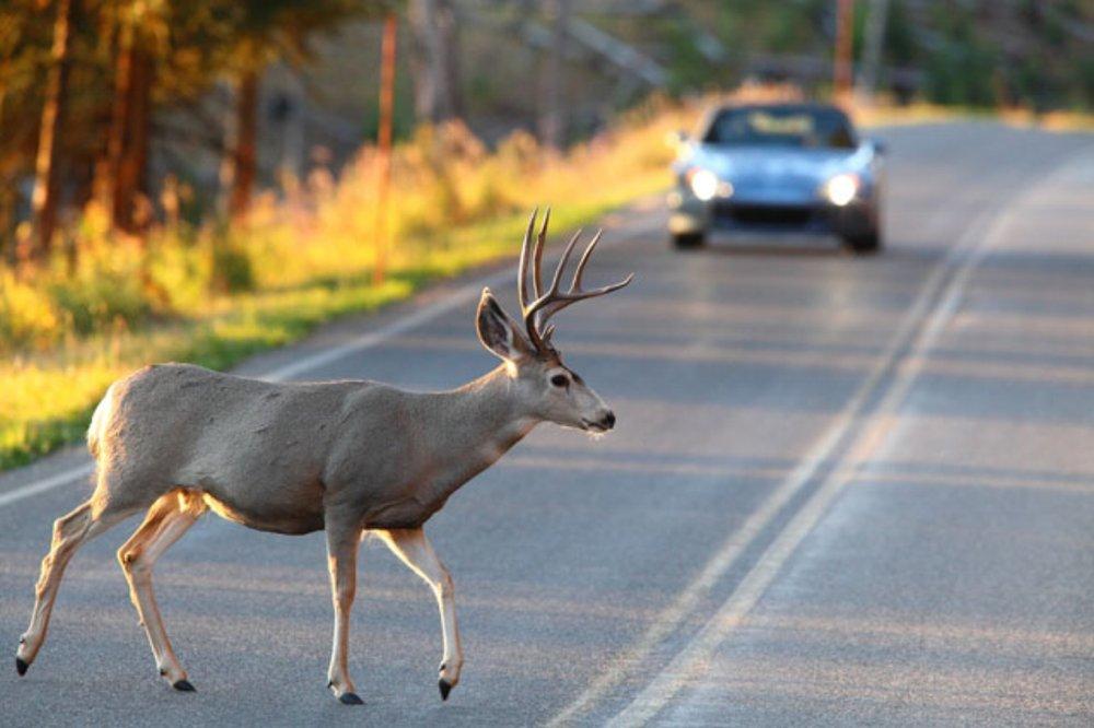 Steering Clear of Wildlife