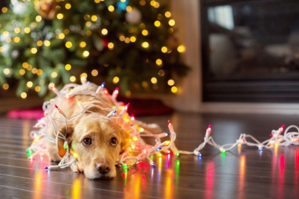 Holiday Safety Tips for Northwest Indiana Pets
