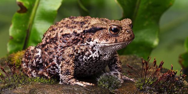 Figure 3: Toad