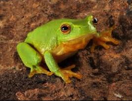 Figure 4: Frog